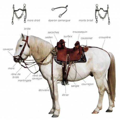 equipement cheval