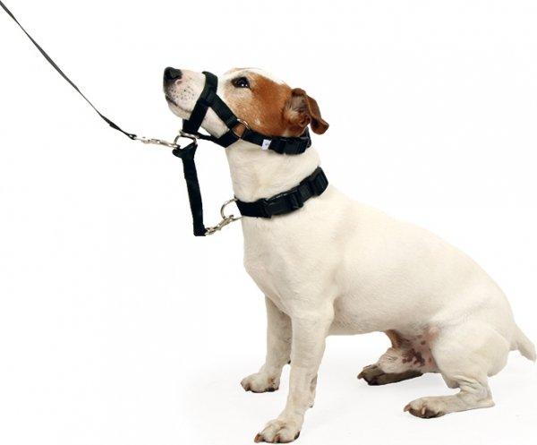 licol chien