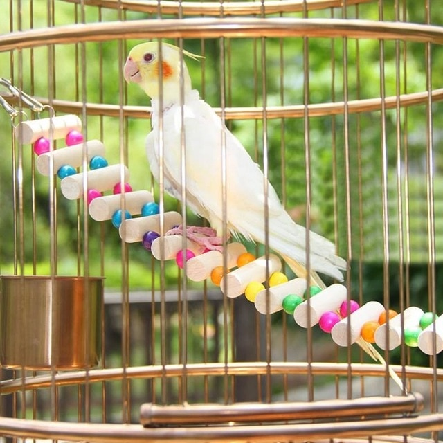 accessoire perroquet