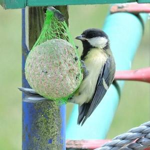 boules pour oiseaux