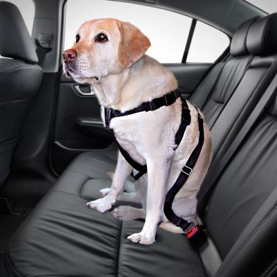 ceinture pour chien