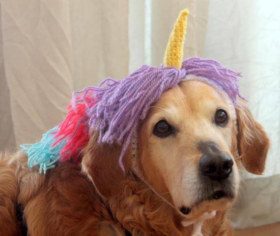 chien licorne