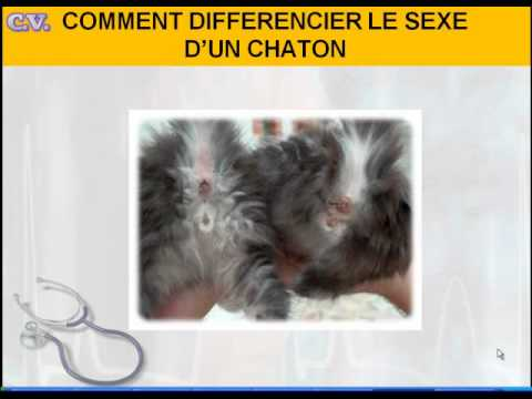 comment reconnaitre le sexe d un chaton