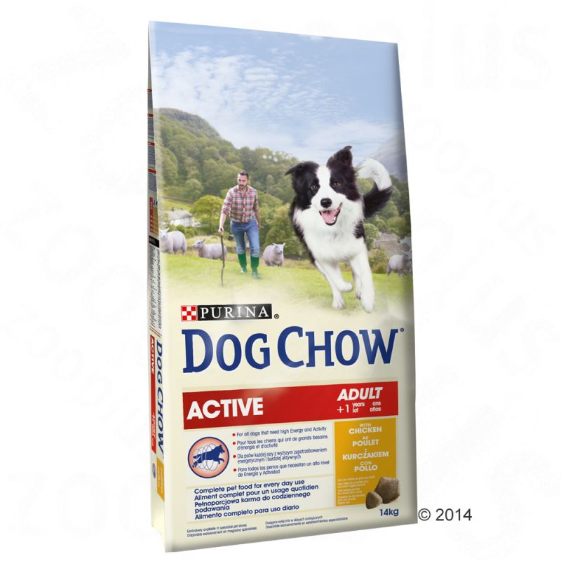 dog chow active