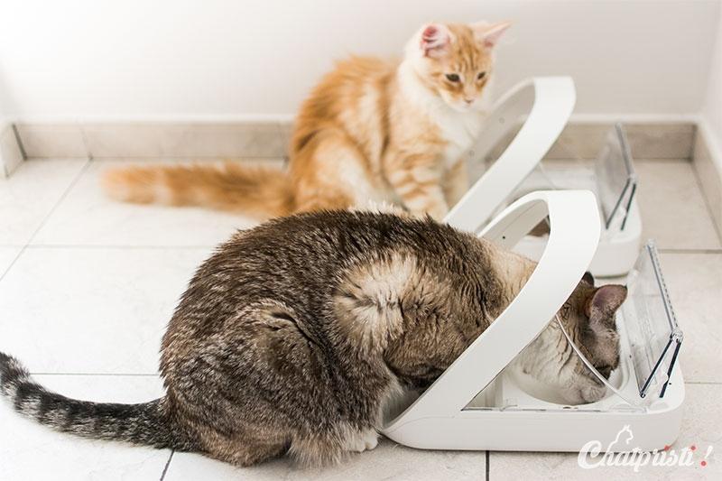 gamelle chat detecteur
