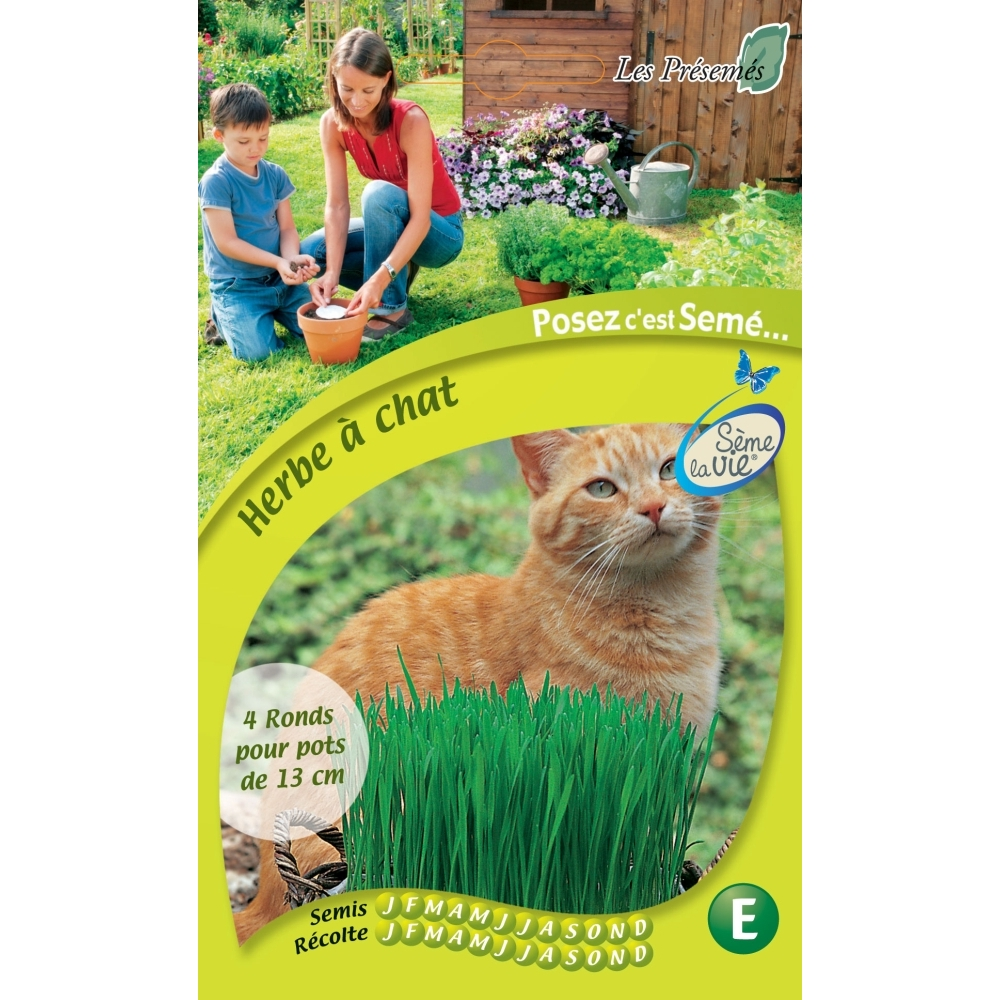 herbe a chat graine