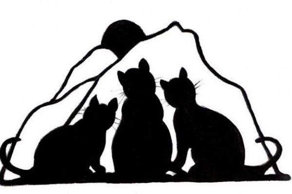les chats du mercantour