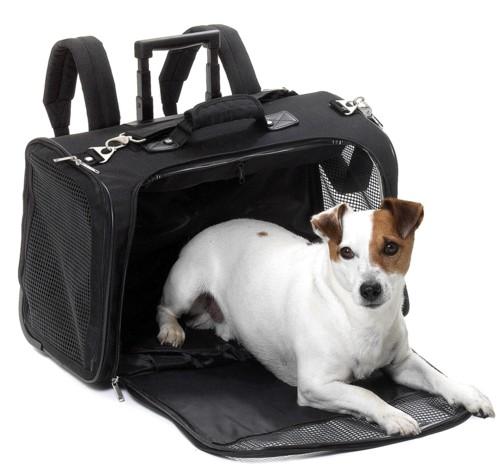 sac de transport pour chien